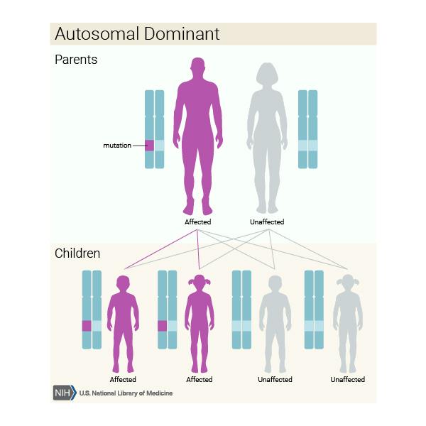 How dominant gene inheritance works